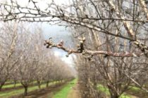 California Almonds: Yolo Co. Meeting Set For February 7