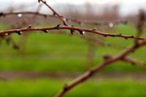 Almonds – Warm Weather Should Stimulate The Buds And The Bees – AgFax Tree Crops