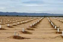 California Almonds: Potted Tree Irrigation After Planting – Getting The First Year Right
