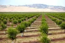 Almond Board of California Invests $4.8 Mln in 'Next-Generation' Farming Research