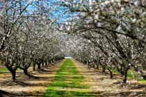 California Almonds: 'State of the Industry' to Kick Off Annual Almond Conference