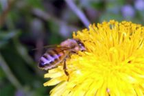 Protecting Pollinators from Pesticides – 3 Tips to Keep in Mind