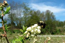 California: Bee Precaution Pesticide Ratings Available from University of Calif. IPM