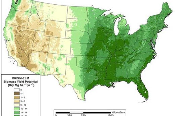 Cellulosic Biofuel Crops: Sorghum Offers Highest Yields in Many Parts of U.S.
