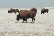 Texas: Cold Temps Move in but Producers Biggest Concern is Dry Conditions