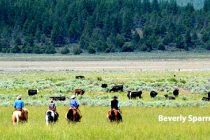 California Ranchers Create a Conservation Legacy – DTN