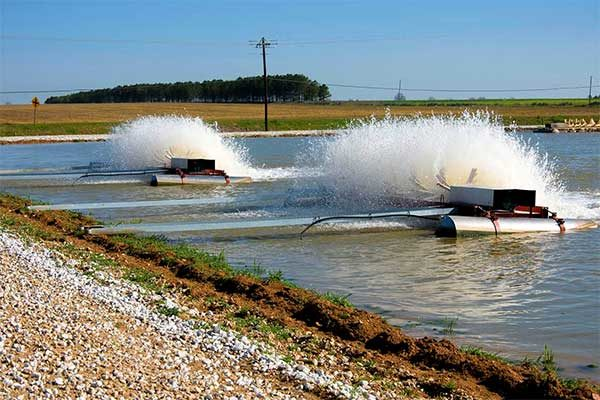 Mississippi Catfish: Smaller Ponds Intensify Production