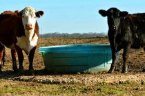 Mississippi Livestock: No Records, but Cattle Markets Offer Promise
