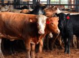 Livestock: World's Largest Cattle-Feeding Operation Changes Hands – DTN
