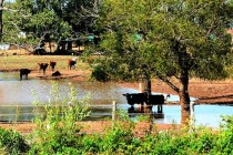 Texas Field Reports: Rains Continue to Bring Mixed Bag to Producers