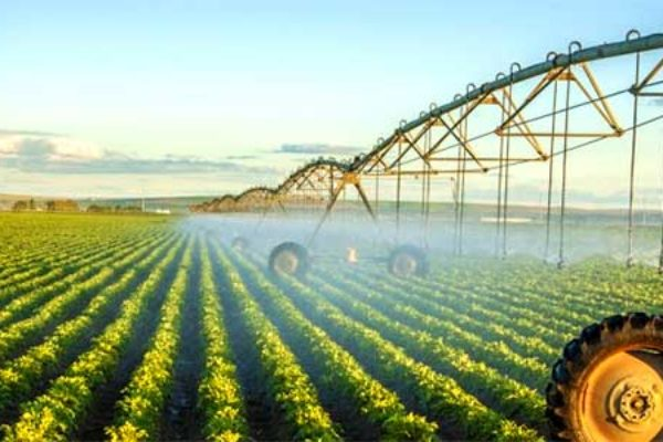 Irrigation Manufacturer Netafim Will Be Bought By Mexican Company