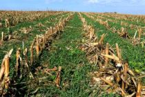 Iowa: Seeding Cover Crops in Dry Conditions