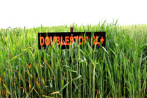 Oklahoma Wheat: Protect Future Yields, Protein Content in Clearfield Fields This Fall