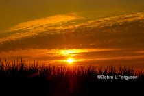 DTN Grain Open: Markets Quietly Lower Overnight