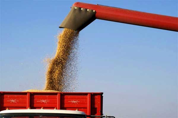 DTN Grain Midday: Trade Moves Lower