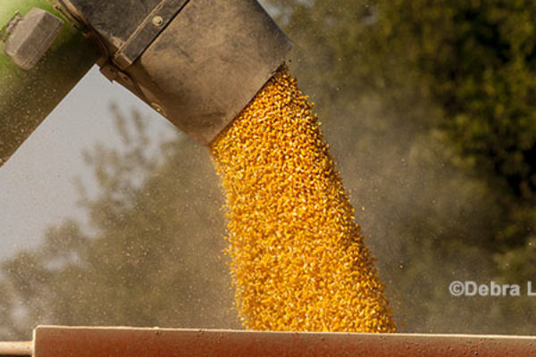 Farm Bill Review: Historical Background on Marketing Assistance Loans