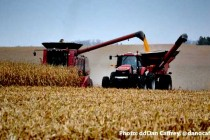 Grain Harvest: Yield Monitor Calibration – Garbage In, Garbage Out