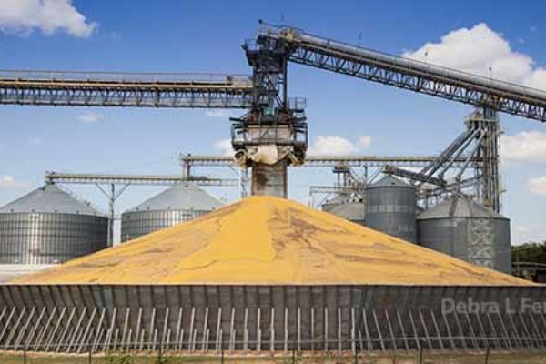 DTN Grain Open: Markets Green Ahead of USDA Reports