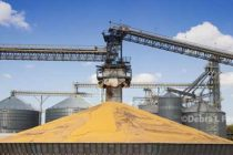 Grain Markets: Moving Forward After the Oct. Reports