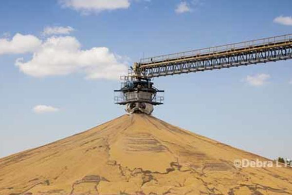 Corn, Soybeans: Large South American Crop Forecasts Place Pressure on Prices