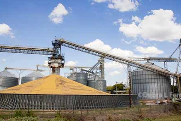 Crop Production: Corn Up 1%, Soybeans, Cotton Both Lowered – USDA
