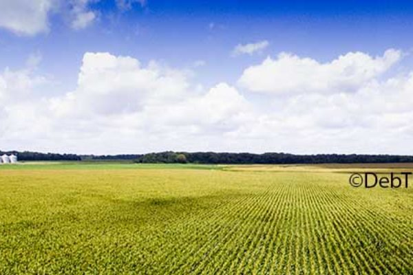 Corn Prices: The Seasonal Rule Helps Navigate Price Volatility – DTN