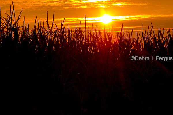 DTN Grain Open: Commodities Under General Pressure