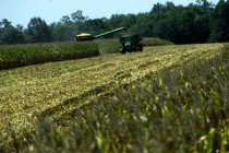 Study Uses Satellite Data to Estimate Crop Yields