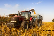 Virginia Field Reports: Good Week for Corn Harvest