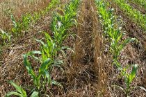 Midwest Cover Crops Council Website Gets New Design