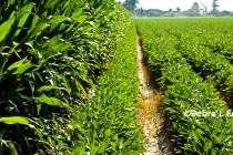 Good on Grain: Prospects for Corn and Soybean Production Estimates