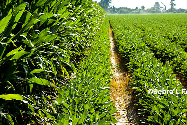 Crop Insurance: Changes to 2018 Crop Insurance Rates