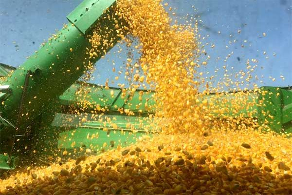 DTN Grain Midday: Trade Continues to Slip