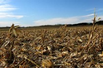 Michigan Corn: Stover Harvest Implications