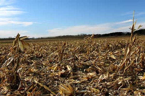 Iowa corn dupont ramps up stover harvest for ethanol dtn agfax iowa corn dupont ramps up stover harvest for ethanol dtn sciox Choice Image