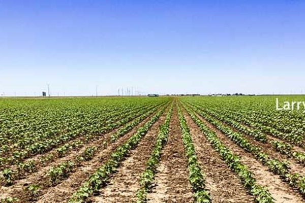 DTN Cotton Open: Ticks Slightly Higher in Tight-Range Action