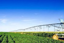 Farm Bill: The Farm Safety Net for Field Crops – Commentary