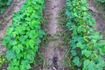 Florida: Mandatory Dicamba Resistant Crop Training, Video Conference, March 16