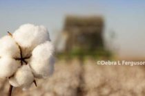 DTN Cotton Close: Extends Bull Run to 8 Straight Weeks