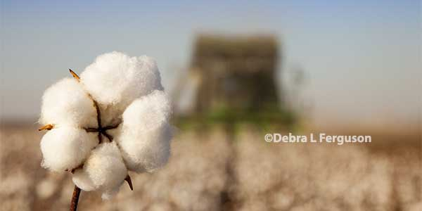 Texas: Plains Cotton Growers Annual Meeting, Lubbock, April 6 – AgFax