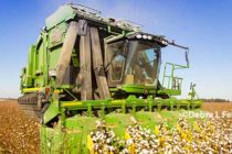 North Carolina Field Report: Soybean, Cotton Harvest Continue, Wheat Being Planted