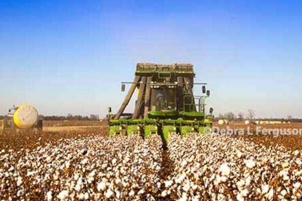 DTN Cotton Open: Gives Back Prior-Session Gain