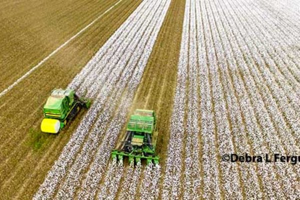 DTN Cotton Close: Settles Flat to Little Changed