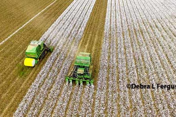 Farm Bill: No Budget Increase Expected; Hope to Fix Cotton and Dairy – DTN