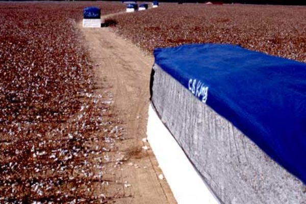 Oklahoma Cotton: State Moves Up in National Production Rankings