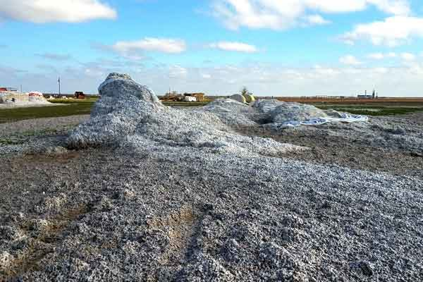 Rose On Cotton: Harvey – How Many Bales Lost, What Effect On Market?