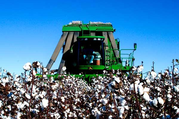 DTN Cotton Close: Settles Higher in 2017-Crop Contracts