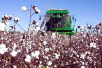 Seed Cotton Program Good for Georgia Agriculture