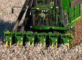 Cleveland On Cotton: No Bears, Just Reasons For Optimism
