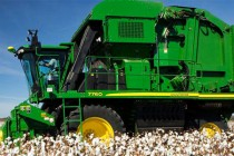 North Carolina Cotton: Yield Results Available From On-Farm Variety Trials